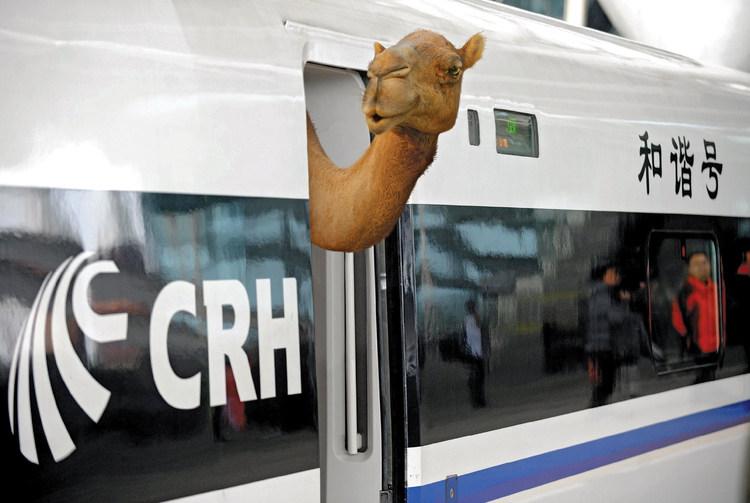 lca-new-silk-road-camel